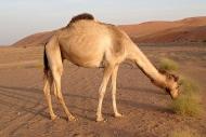 Za exotikou do Ománu